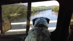 Checking out the river ...